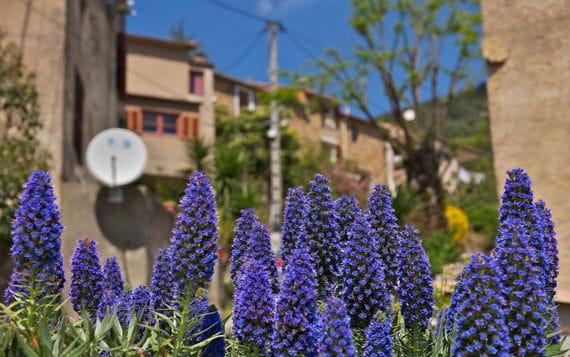 Casaglione-planten