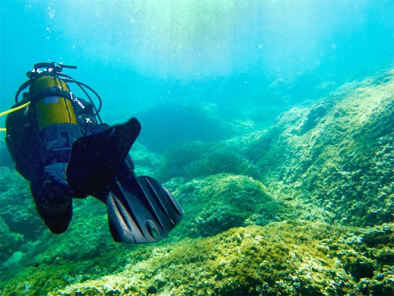 Duiker-zwemt-weg-op-Corsica