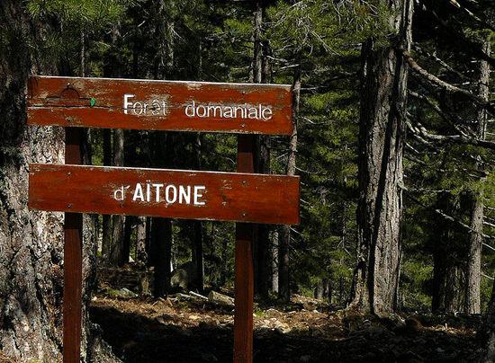 Foret-d-Aitone-Corsica-ingang-bos-bord