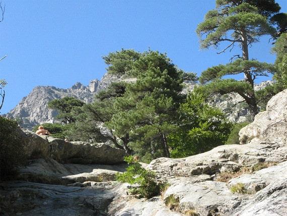 Foret-de-Vizzavona-bomen-en-berg