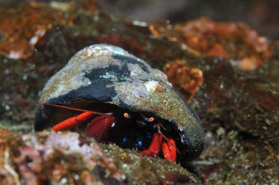 Krab-onderwater-Parc-Marin-bij-Bonifacio