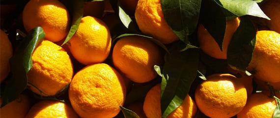 Mandarijnen-fruit-op-Corsica