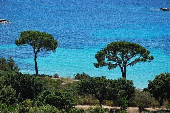 Palombaggia-bomen-en-zee