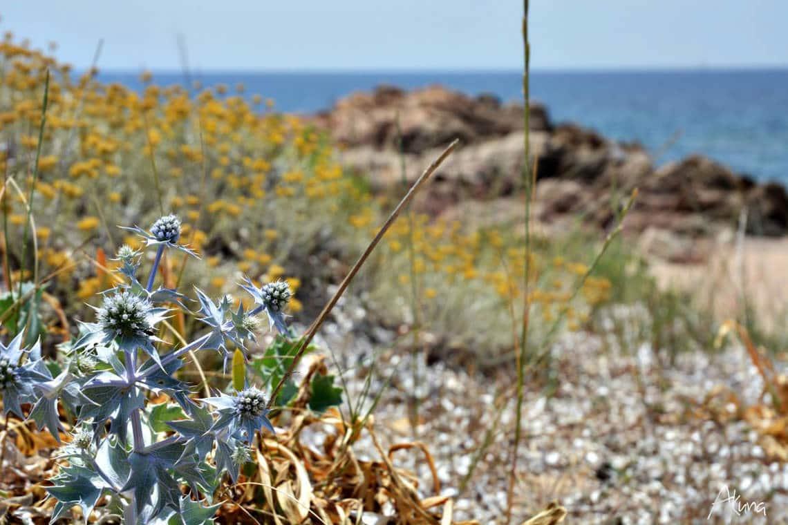 Parc-naturel-regional-de-Corse-Corsica