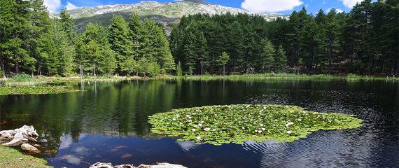 Weersverwachting-op-Corsica-meer-met-bomen