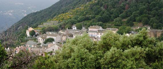 Canari-vanuit-de-bergen