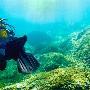 Duiken op Corsica: aanschouw de bijzondere zeebodems