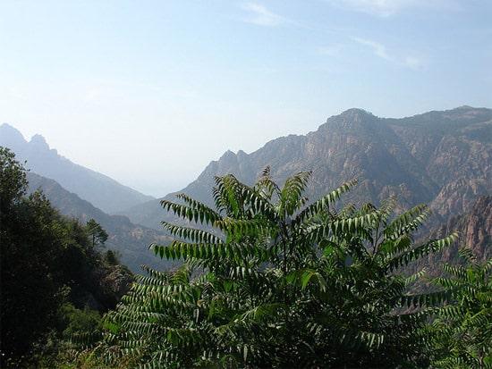 Foret-d-Aitone-Corsica-uitzicht-op-de-bergen
