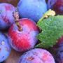 Eten op Corsica: groente en fruit