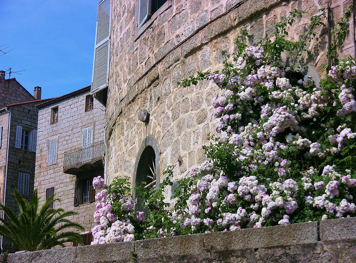 Sartene-muur-met-bloemen